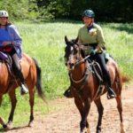 Les essentiels de la trousse de premiers soins pour chevaux